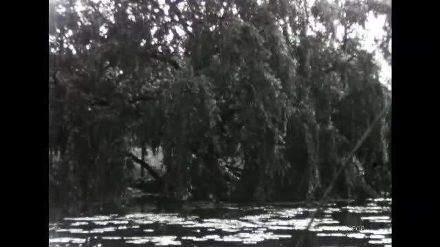 Autour d'un étang de Picardie
