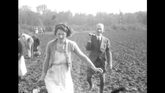 Plantation et arrachage des pommes de terres