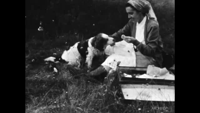 Chasse à Sissonnes 1954 - Belle et Erak mars 1955