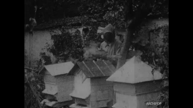 Abeilles - La récolte du Miel (Les)